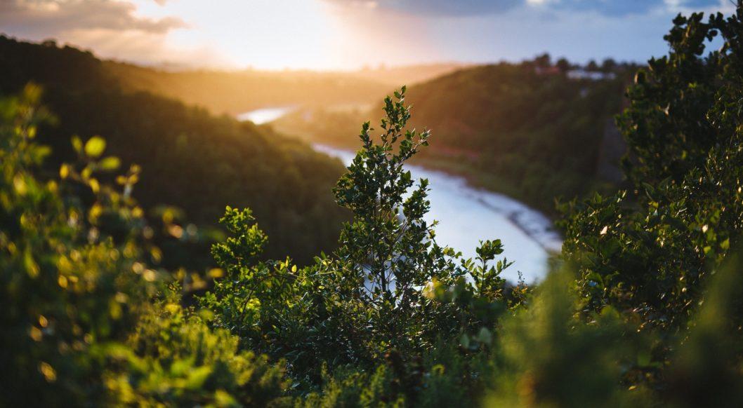 natur bach bäume Urwald
