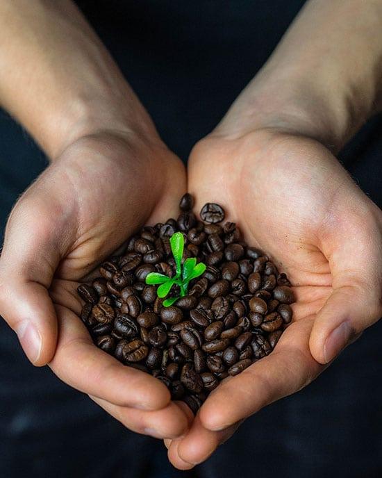 fairtrade süßigkeit schokolade kaffe